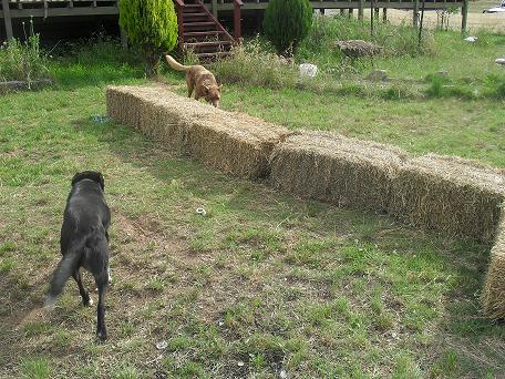 Laying out the bales